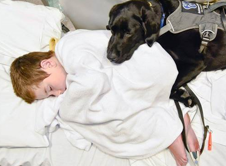 Depression in Kids and The Role of Pets