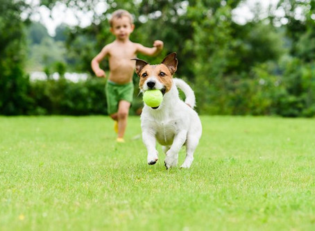Discover How Your Dog Can Help Fight Childhood Obesity