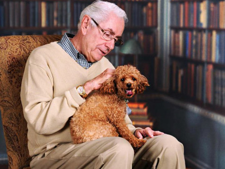 Dogs Protect The Elderly From Loneliness