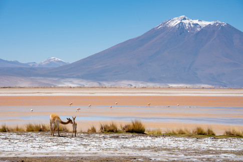 Road from Calama to Bolivia