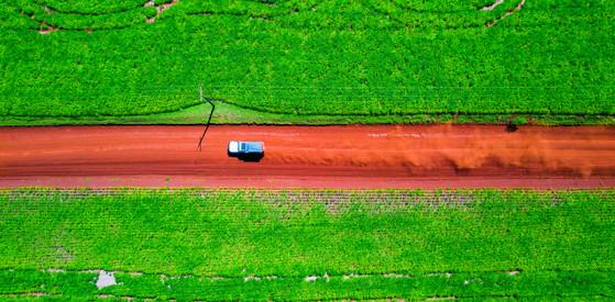 Paraguayan Agriculture