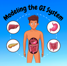 21:51 -- Beginner How do the organs of digestion fit together to nourish your body?