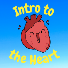 34:02 -- Beginner What does the heart do and why is it so important?