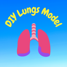 13:19 -- Beginner How do you get air into your lungs? Why do you need a diaphragm?