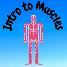 20:33 -- Beginner What are muscles and how do they allow us to move?