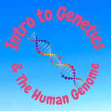 25:42 -- Beginner What are genetics and DNA? How do they influence you?