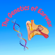 24:42 -- Intermediate Did you know earwax is genetic? How do your genes compare with your actual earwax?