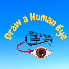 26:00 -- Beginner What are the parts of the human eye and how do they allow us to see?