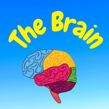 31:30 -- Beginner What is the brain and how is it organized?