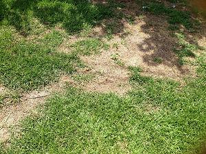 Lawn Disease Care