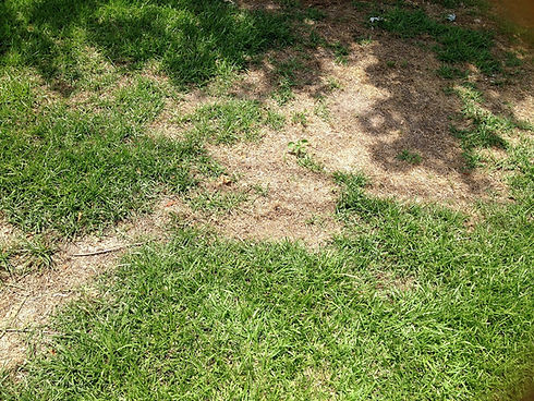 Repair earth Soil Or Add Sod