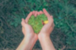 person-holding-green-grains-1230157.jpg