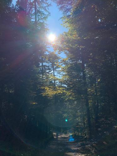 Wald_Sonne.jpg