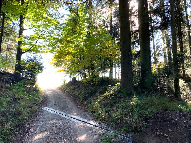Wald_Ausgang.jpg
