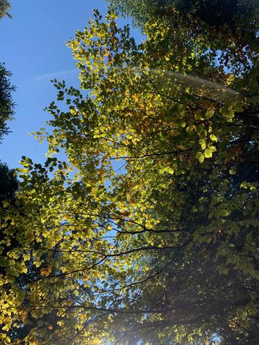Wald_Herbstblätter.jpg
