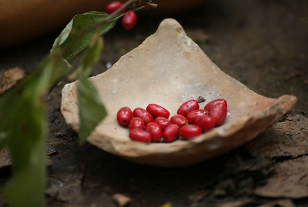 spiceberries-5350.jpg