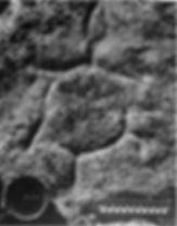 Kentucky archaeology, rock art, petroglyph, Woodland Indians