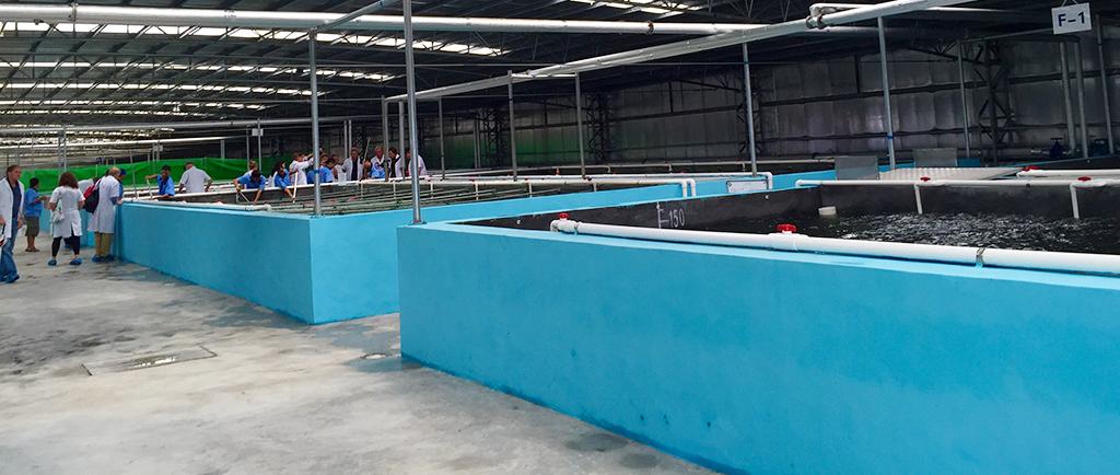 Aquafarm 2