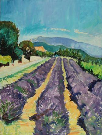 Lavendelveld bij Novézan