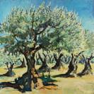 Olijvengaard bij Mirabel-aux-Baronnies