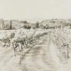 Wijngaard bij Font de Barral