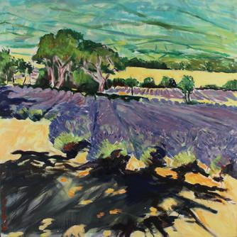 Lavendelvelden boven Sainte-Jalle