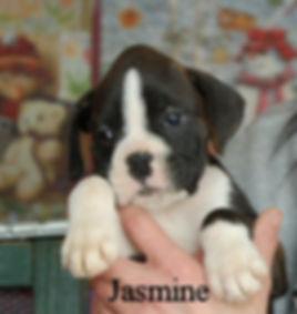 jasmine1.jpg
