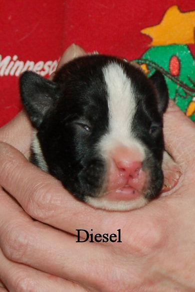 diesel17.jpg
