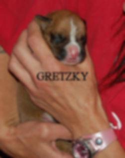 gretzky1.jpg