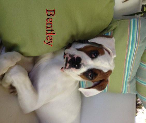 bentley5.jpg