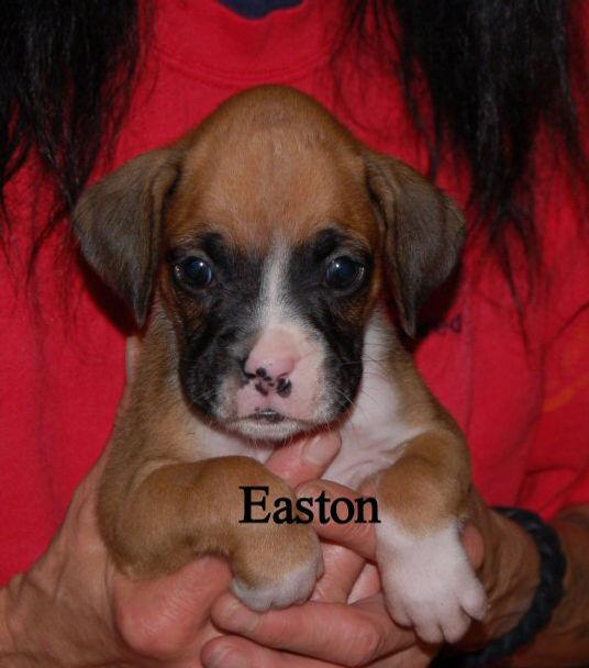 easton1.jpg