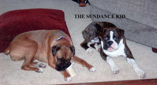 sundance4.jpg