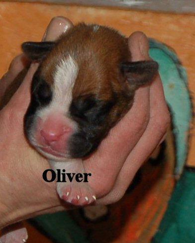 oliver4.jpg