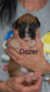 dozer2.jpg