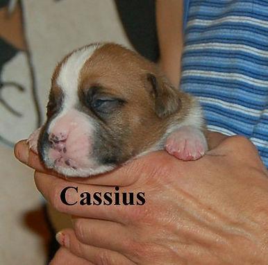 Cassius3.jpg