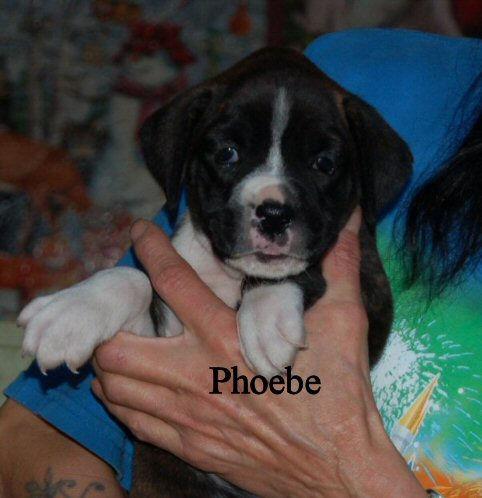phoebe3.jpg
