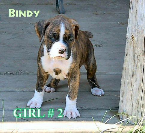 bindy1.jpg