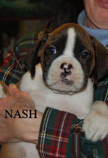 nash2.jpg