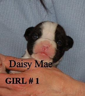 daisymae1.jpg