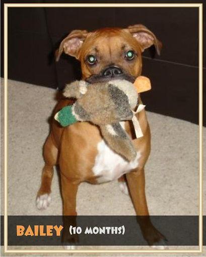 Bailey10.jpg
