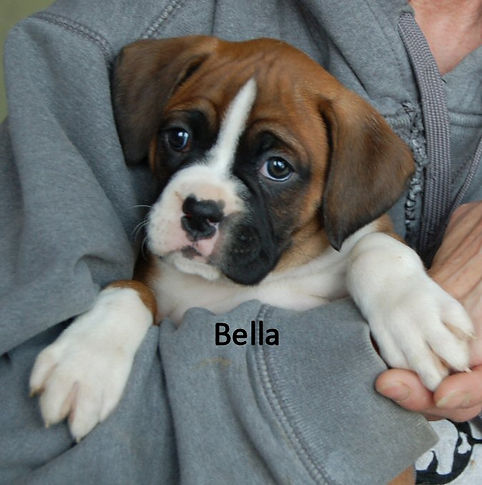 Bella1.jpg