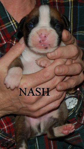 nash1.jpg