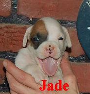 Jade1.jpg