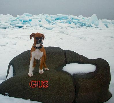 gus1.jpg