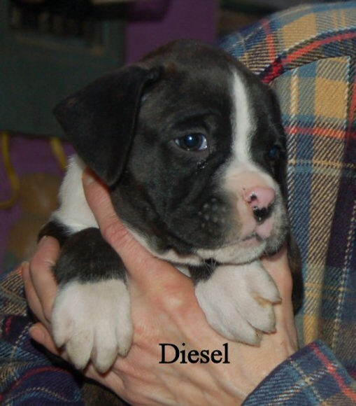diesel18.jpg