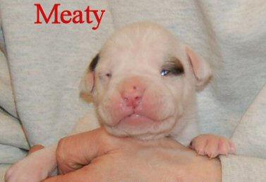 meaty.jpg
