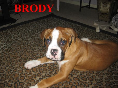 brody11.jpg