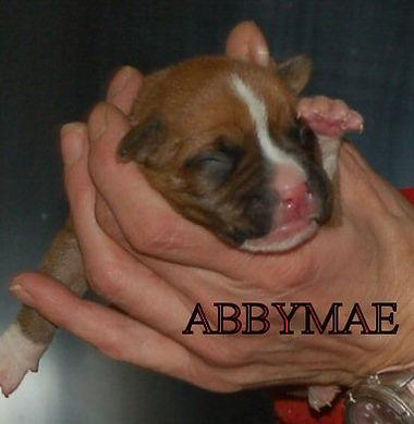 abby3.jpg