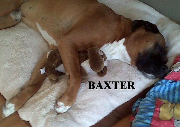 baxter10.jpg
