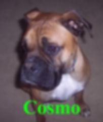 cosmo.jpg